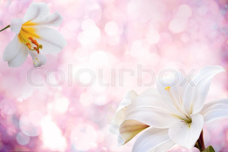 Stock image of 'Flowers background with lily.Spring Flowers  '
