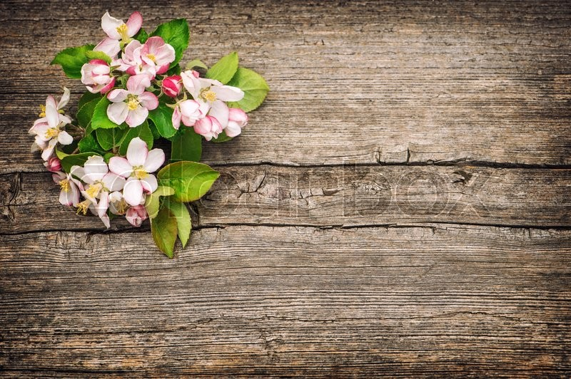 Stock image of 'Blossoms of apple tree flowers on rustic wooden background. Vintage style toned picture'