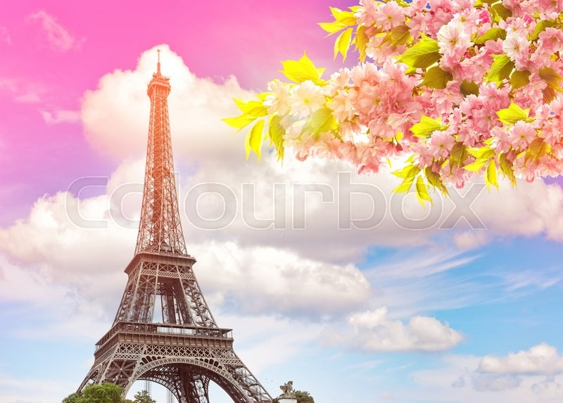 Stock image of 'Eiffel Tower Paris against colorful blue sunset sky. Blossoming spring cherry tree. Vintage style toned picture'
