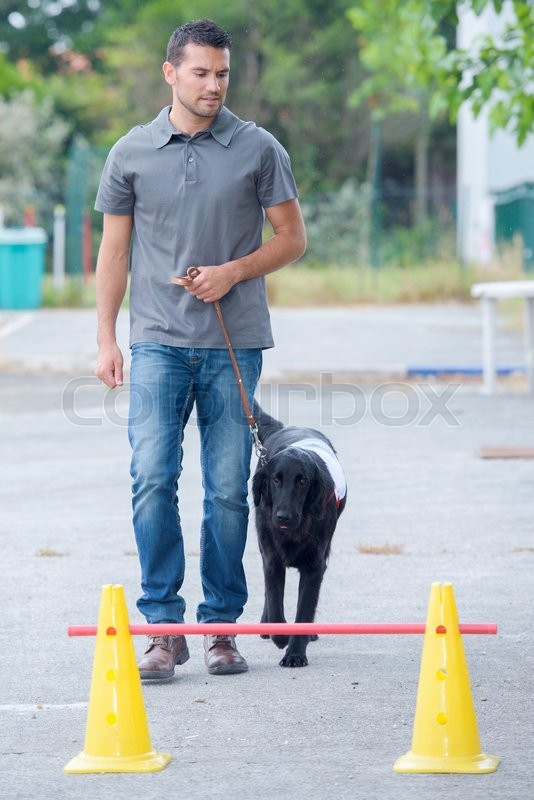Stock image of 'Dog trainer'