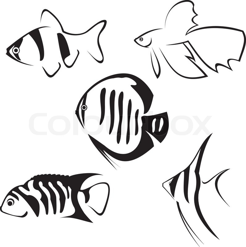 Aquarium Fish Line Drawing In Black Stock Vector Colourbox