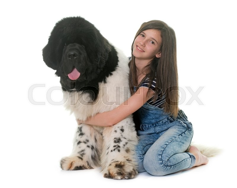 Stock image of 'teenager and newfoundland dog in front of white background'