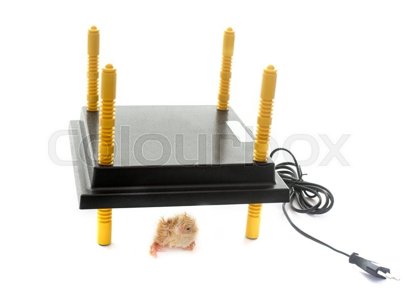 Stock image of 'chick heating system in front of white background'