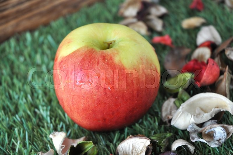 Stock image of 'Fresh red apple on green grass with dried plant'