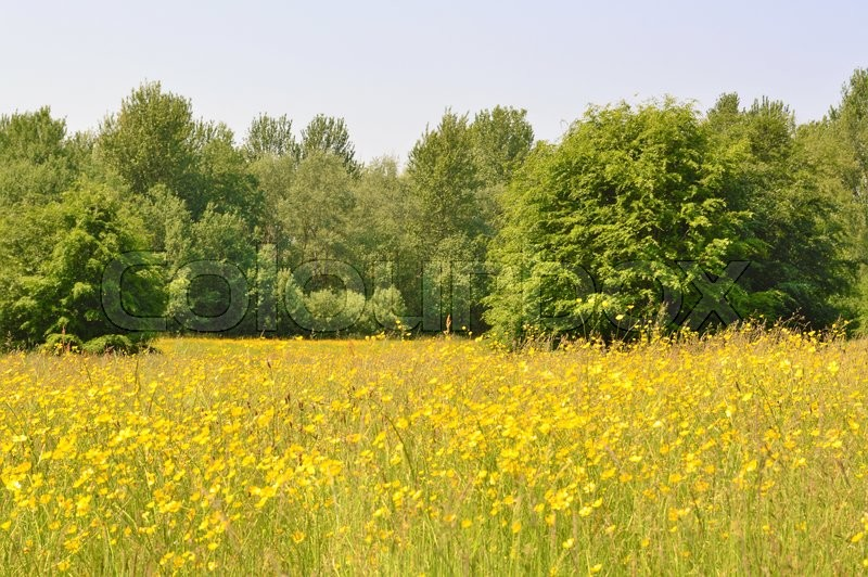 Stock image of 'A colourful flower meadow in early Summer.'