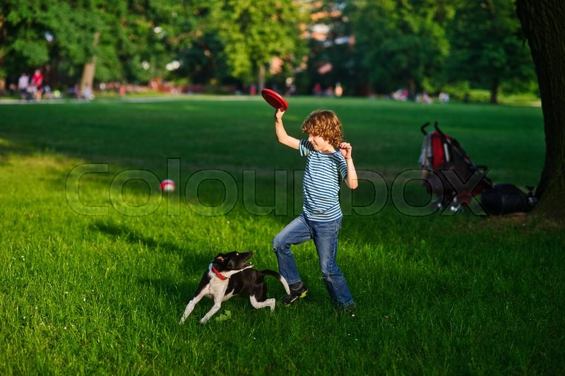 Stock image of 'The boy plays in park with the dog. Green glade in park. The blond boy of 8-9 years holds a red disk in hand. The average size the dog of a black-and-white color willingly plays with the owner.'