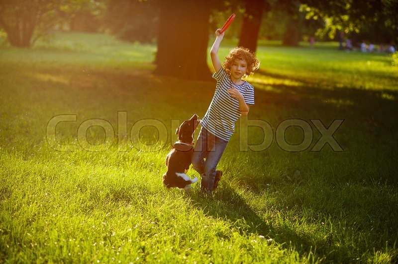 Stock image of 'Boy of 8-9 years plays with his black and white dog on the lawn in the park. He has raised a hand with frisbee up. The doggy stand on hinder legs. She is ready to a jump. Scattered sunlight.'
