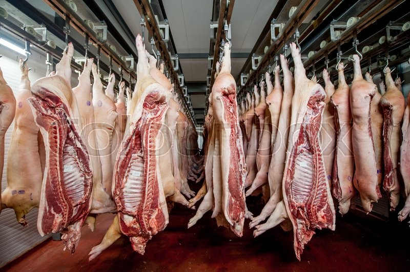 Stock image of 'raw pig meat factory hanging conveyor pork'