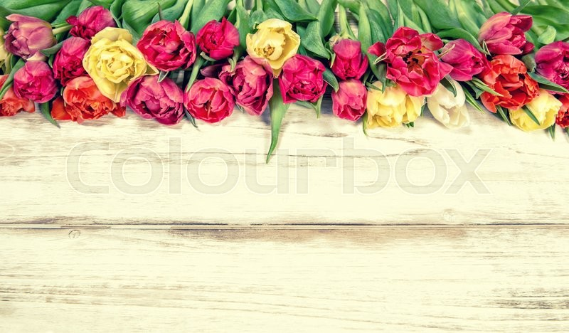 Stock image of 'Fresh multicolor tulips. Spring flowers. Vintage style toned picture'