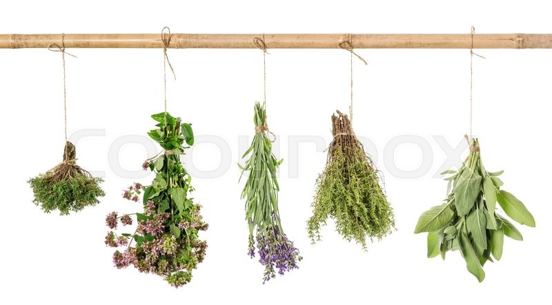 Stock image of 'Herbs hanging isolated on white background. Fresh sage, thyme, oregano, marjoram, lavender'