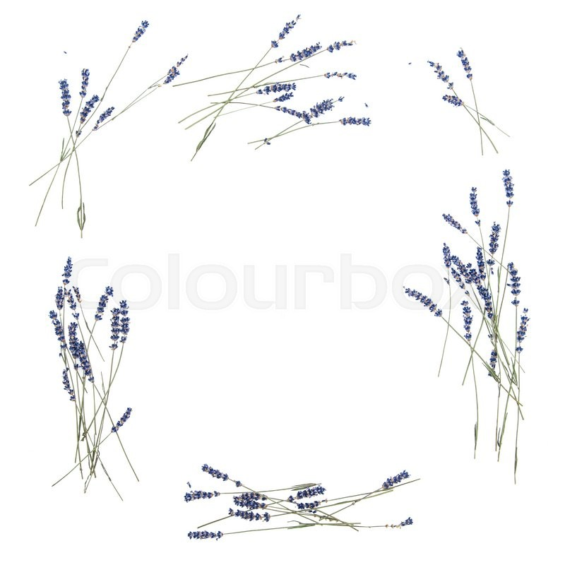 Stock image of 'Lavender flowers. Floral frame from dried plants. Flat lay background'
