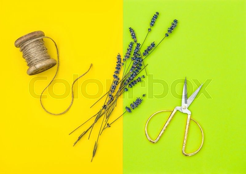 Stock image of 'Dried lavender flowers and vintage scissors on color background. Minimal concept: flat lay'