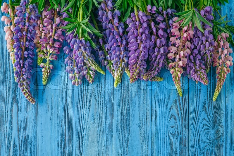 Stock image of 'Fresh lupines arranged on old wooden background with copy space for your message'