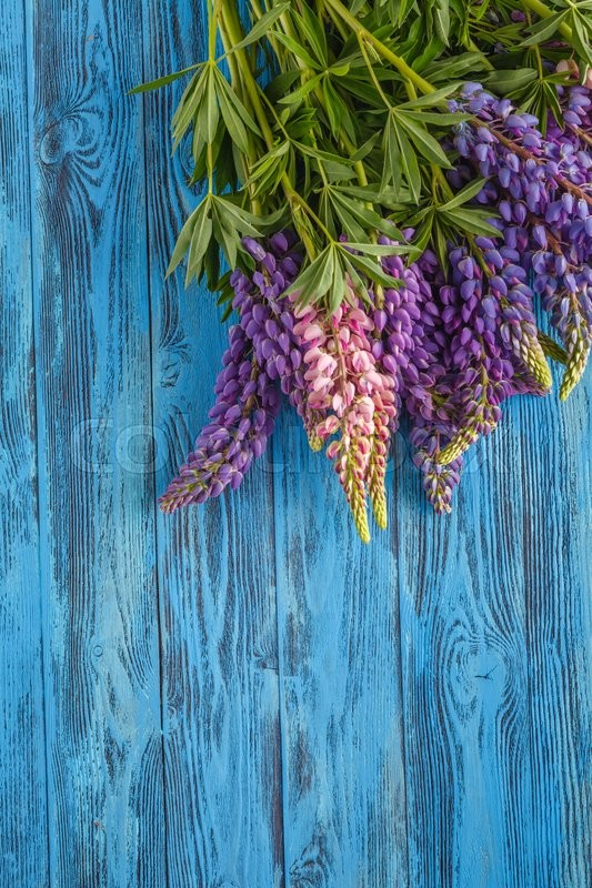 Stock image of 'bouquet of wild lupin flowers on blue table'