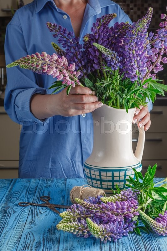 Stock image of 'Woman's hands tying together a bouquet of lupines'