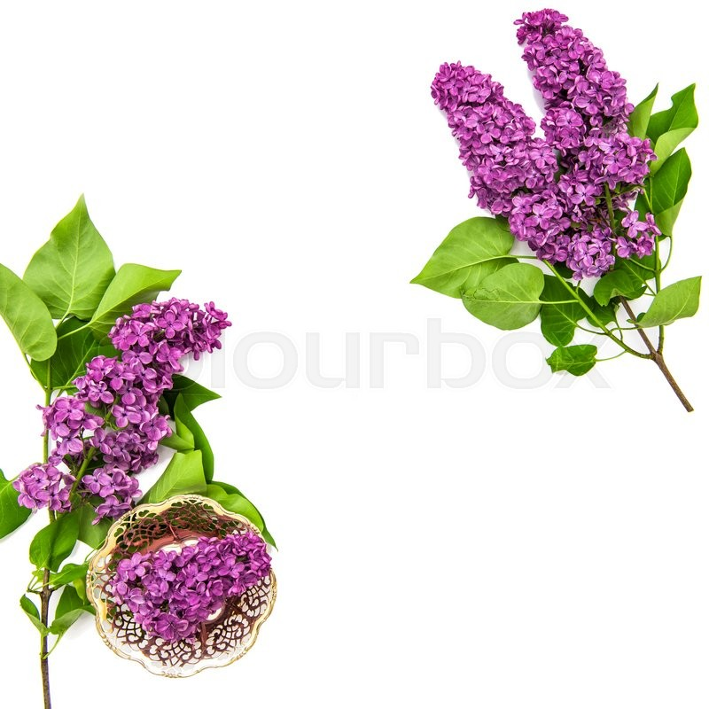 Stock image of 'Lilac flowers on white background. Spring bloossoms. Top view'