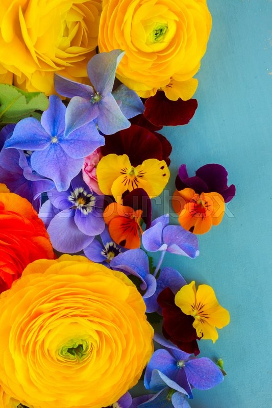 Stock image of 'Fresh Flowers Background on Blue - ranunculus, pansies and hortensia'