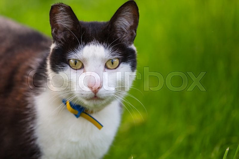 Stock image of 'Cat'