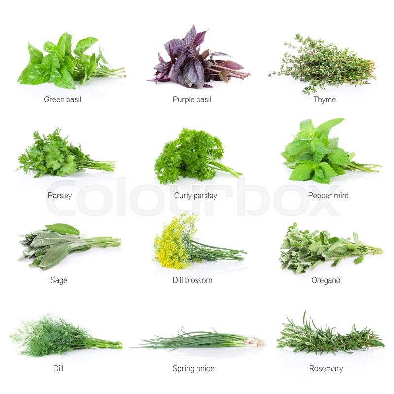 Stock image of 'Fresh garden herbs set. Isolated on white background'