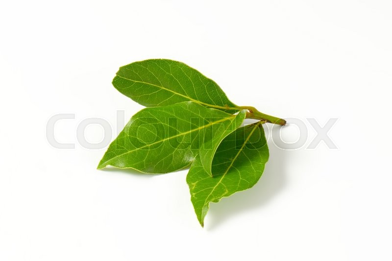 Stock image of 'Sprig of bay leaves on white background'