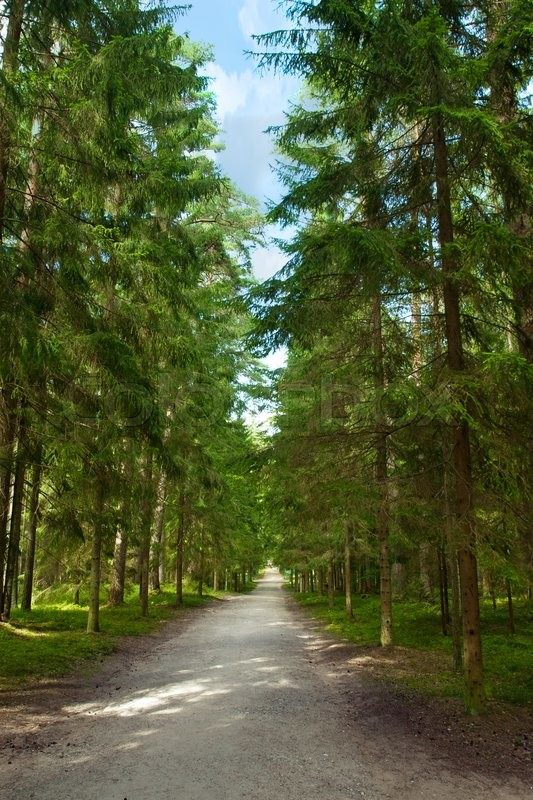 Stock image of 'Walking path in the pine forest'
