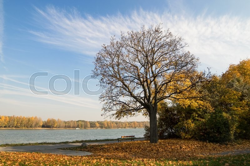 Stock image of 'Autumnal landscape with a tree, blue sky and golden leaves'