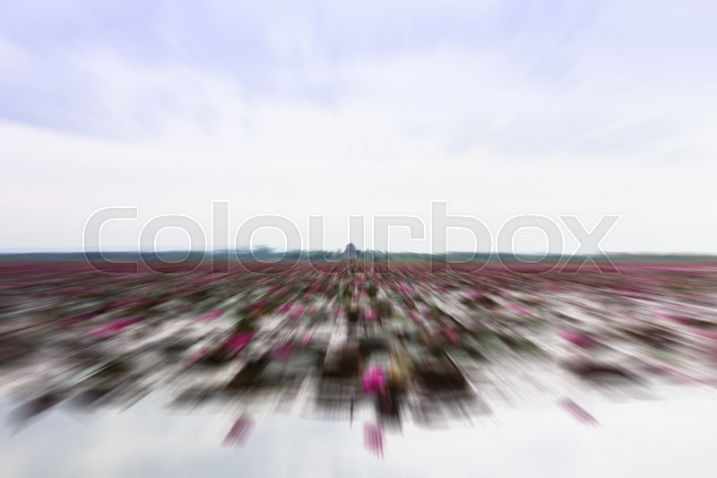 Stock image of 'Lake of red lotus at Udonthani Thailand with radial blur background, stock photo'