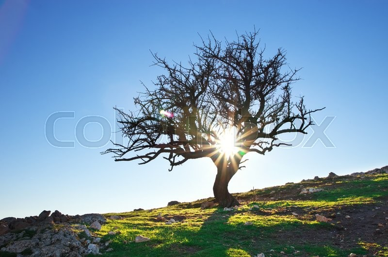 Stock image of 'Lonely tree in mountain. Composition of nature.'