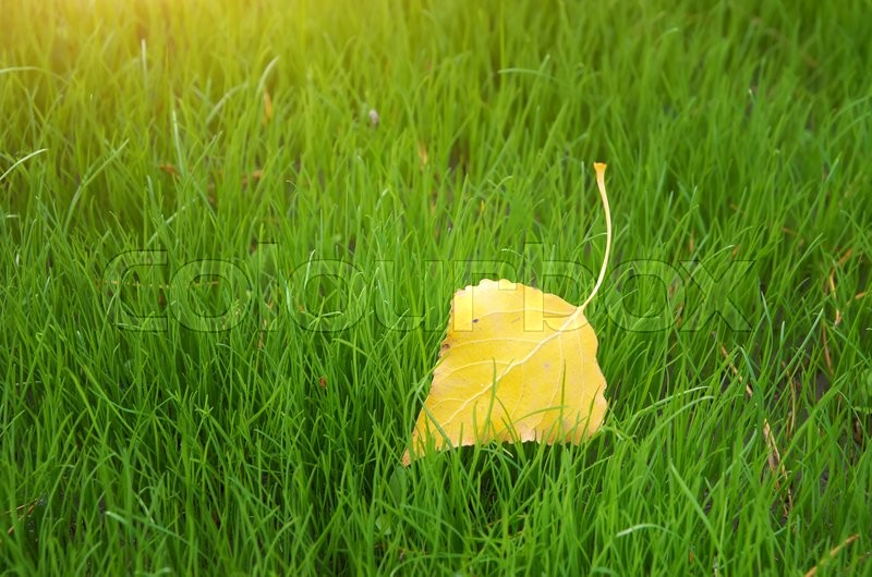 Stock image of 'First autumn leaf. Nature composition.'