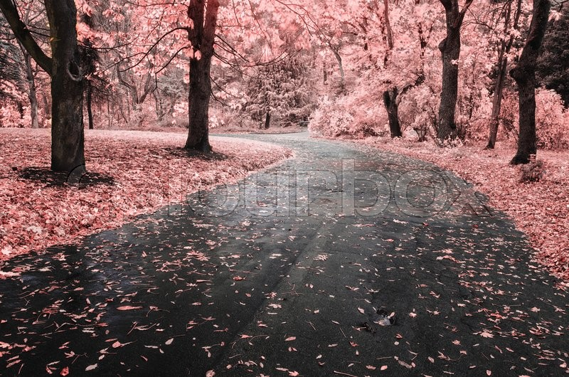 Stock image of 'Autumn landscape. Composition of nature. Path in park.'