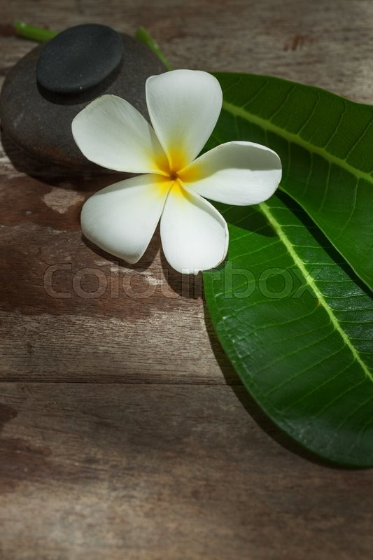 Stock image of 'close up view of   frangipani  flower  on color back'