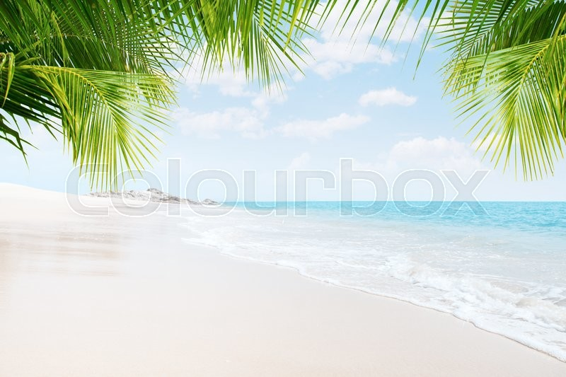 Stock image of 'View of nice tropical  beach  with some palms around'