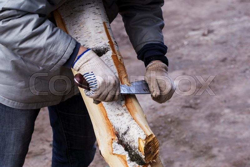 Stock image of 'man removes the bark from a tree'