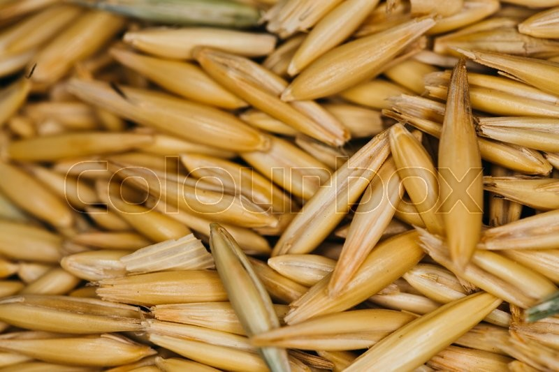 Stock image of 'lot of fresh beans close-up  of oats'