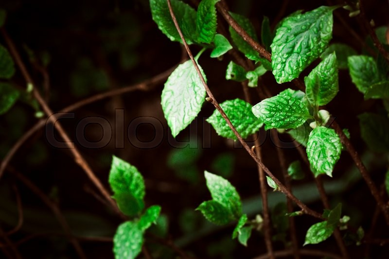 Stock image of 'green leaves on the background of  nature'