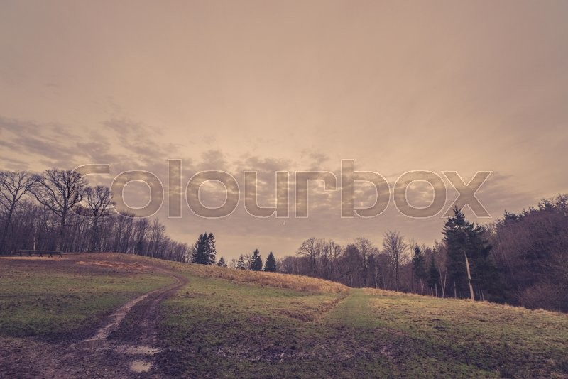Stock image of 'Road on a field by a forest in the fall'