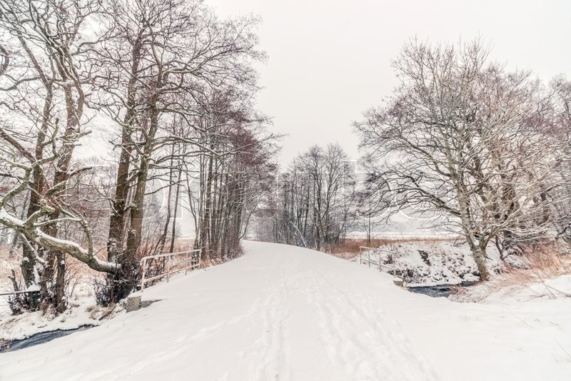 Stock image of 'Trees along a forest trail with snow in the winter'