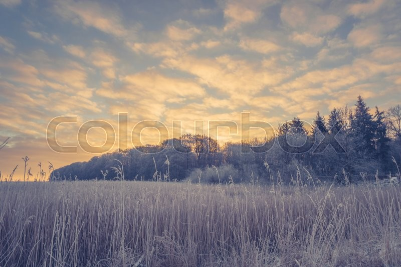 Stock image of 'Winter landscape with trees on a field and a sunrise'