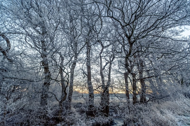 Stock image of 'Branches covered with frost in the sunrise on a winter morning'
