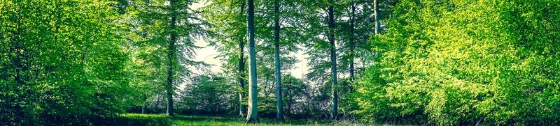 Stock image of 'Trees and plants in a forest panorama scenery'