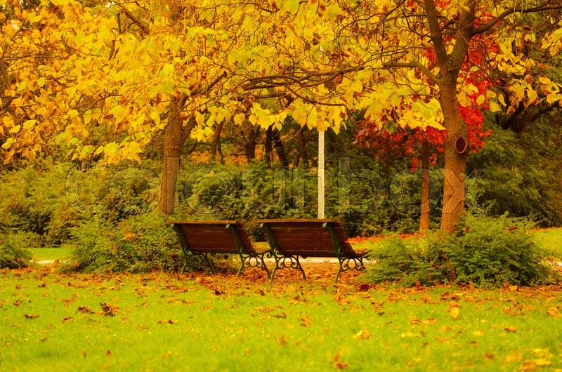 Stock image of 'Autumn sunny park with orange trees and two benches, natural seasonal background'