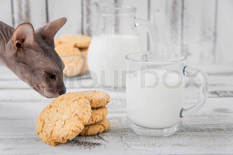 Stock image of 'fresh healthy milk and cookies with cat'