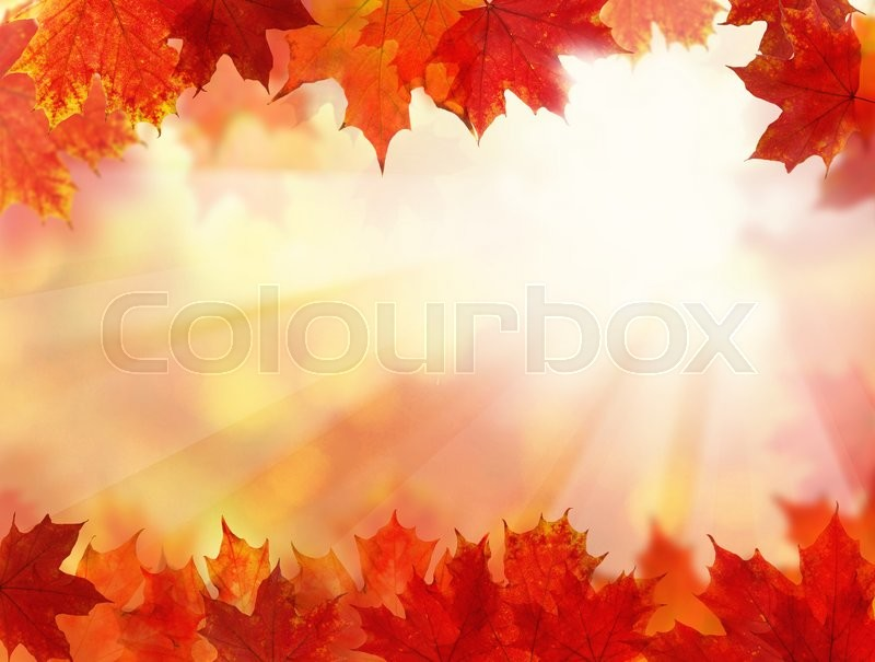 Stock image of 'Fall Background with Autumn Maple Leaves'