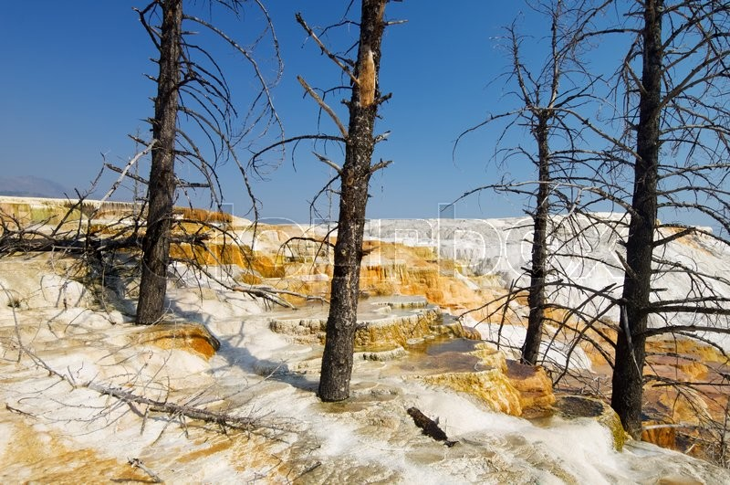 Stock image of 'mammoth Terraces in Yellowstone National Park, Usa.'