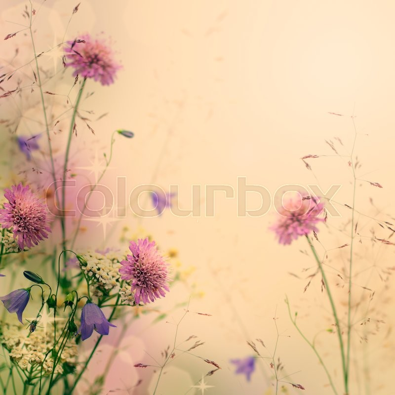 Stock image of 'Gentle color floral background with flowers'