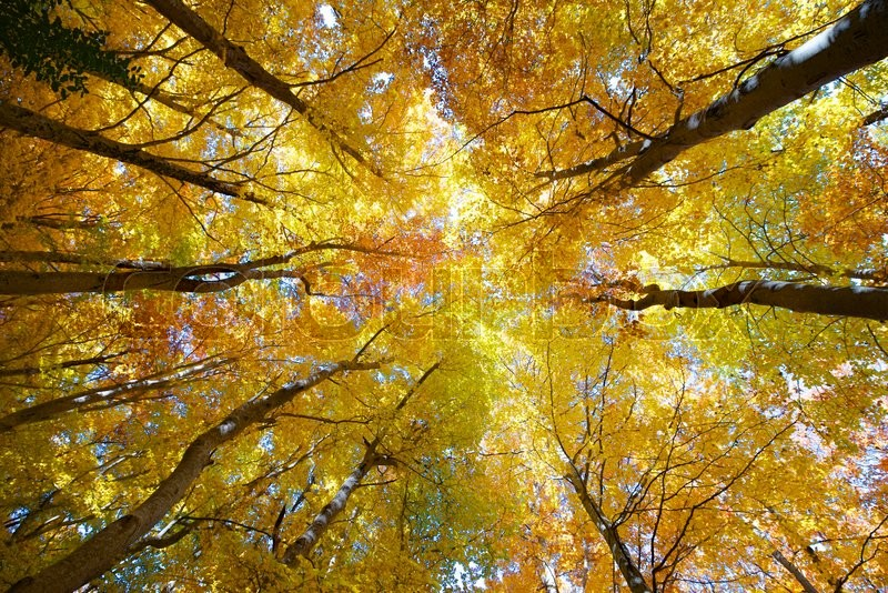 Stock image of 'view of  a beech forest in the natural park of Moncayo, Zaragoza, Aragon, Spain'
