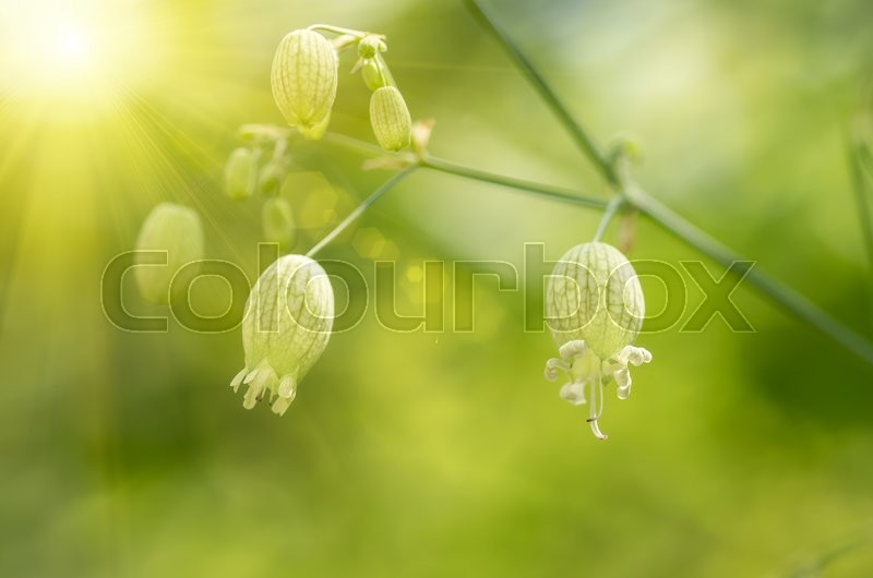Stock image of 'Forest beautiful flower in the sun background'