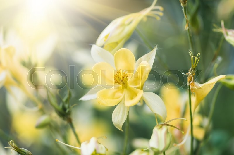 Stock image of 'beautiful yellow spring flower in a forest close-up background'