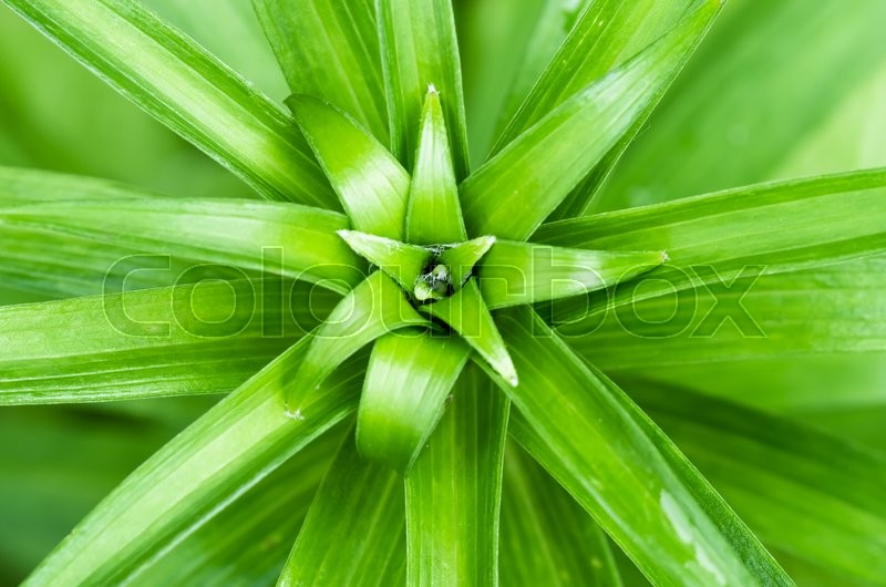 Stock image of 'tropical green long leaves in the jungle'