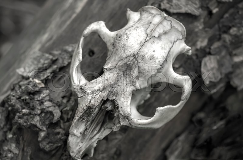 Stock image of 'skull of a dead animal in the forest'